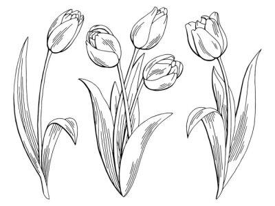 Väggdekor Tulpan blomma grafiskt svart vit isolerad skiss illustration vektor