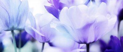 Väggdekor tulpaner cyan violett ultra ljus