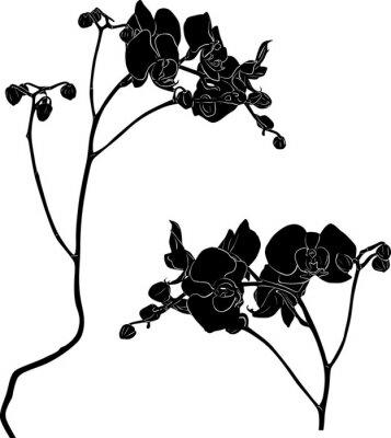 Väggdekor två orkidé grenar skisser på vitt