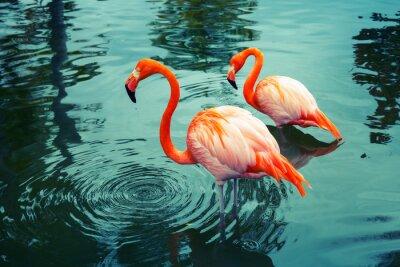 Väggdekor Två rosa flamingos som gick i vattnet med reflektioner