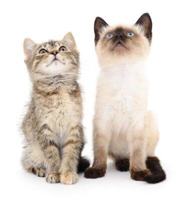 Väggdekor Två små kattungar