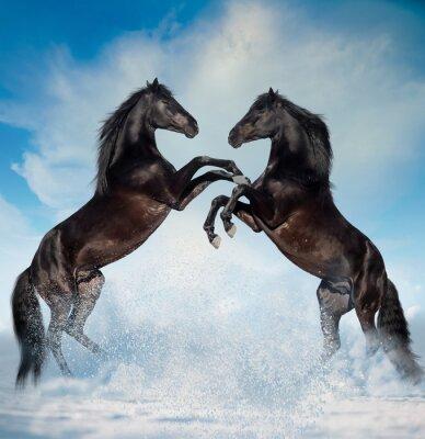 Väggdekor två svarta uppfödda hästar på vinter bakgrund