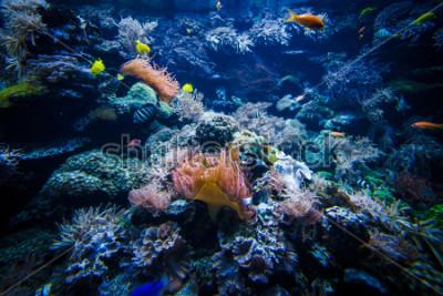 Väggdekor undervattenskorallrevlandskap med färgglada fiskar
