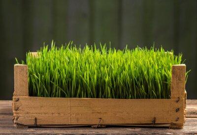 Väggdekor Unga gröna groddar