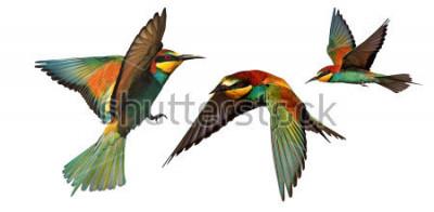 Väggdekor uppsättning av färgfåglar i flygning isolerad på en vit bakgrund