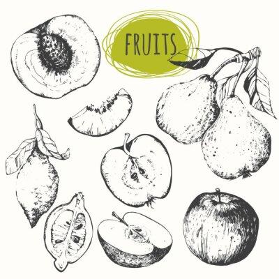 Väggdekor Uppsättning av handritad äpple, citron, päron, persika. Skissa frukter.