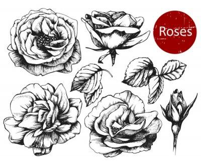 Väggdekor Uppsättning av mycket detaljerade handritad rosor. Vektor