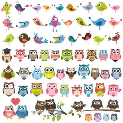 Väggdekor uppsättning av tecknade färgglada fåglar och ugglor
