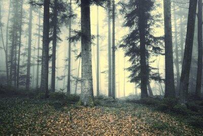 Väggdekor Vacker dimmig skogsträd saga. Magi dimmigt ljus i skogen.
