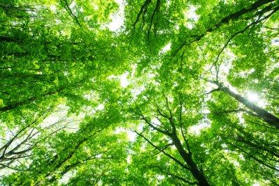 Väggdekor vacker grön skog