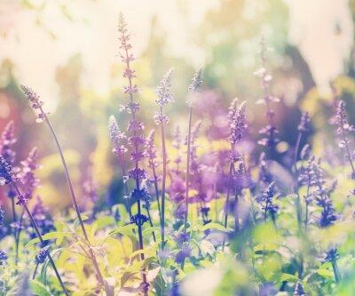 Väggdekor vacker sommar bakgrund, lavendel fält, närbild