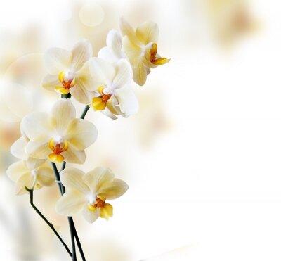 Väggdekor Vacker vit orkidé