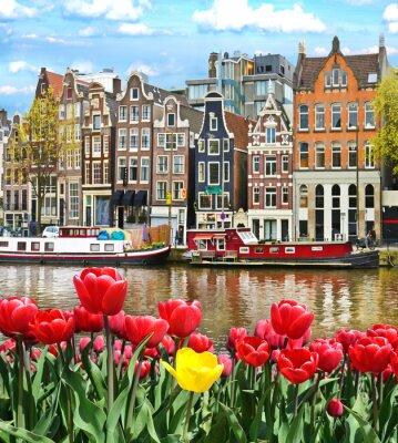 Väggdekor Vackert landskap med tulpaner och hus i Amsterdam, Holland