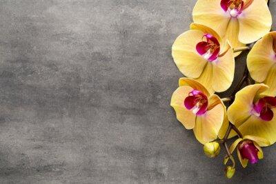 Väggdekor Vackra rosa orkidé på en grå bakgrund.