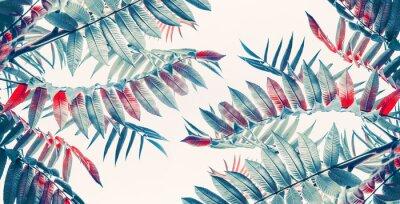 Väggdekor Vackra tropiska blad bakgrund, banner