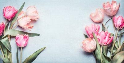 Väggdekor Vackra tulpaner i rosa pastellfärg på ljusblå bakgrund, toppvy, ram, kant. Härligt gratulationskort med tulpaner för mammors dag, bröllop eller glad händelse