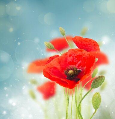 Väggdekor vallmo blommor