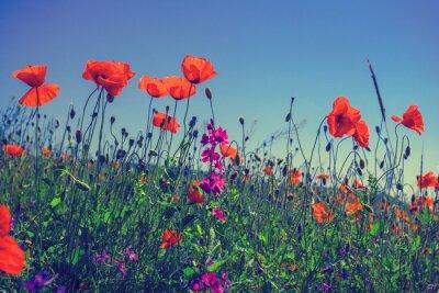 Väggdekor Vallmo blommor mot himlen