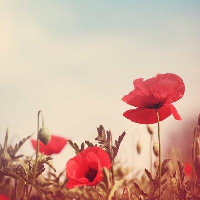 Väggdekor vallmo blommor retro stiliserad bild