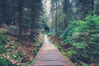 Väggdekor vandringsled i skogslandskapet