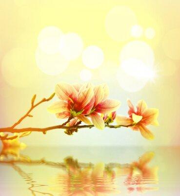 Väggdekor Vårblomma magnolia bakgrund