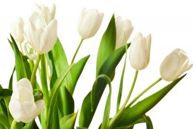 Väggdekor Vårtulpan i vitt