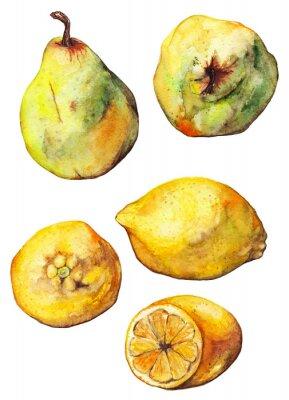 Väggdekor Vattenfärg citron citrus päron frukt uppsättning isolerade