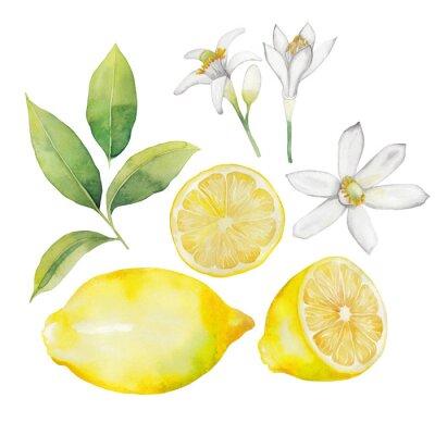 Väggdekor Vattenfärg citron samling