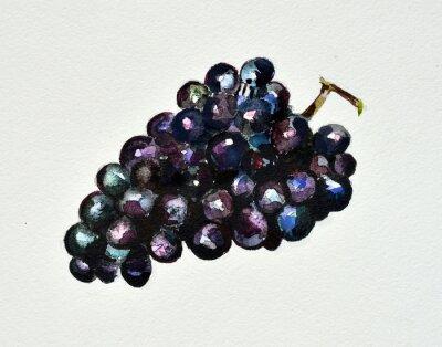 Väggdekor vattenfärg druvor