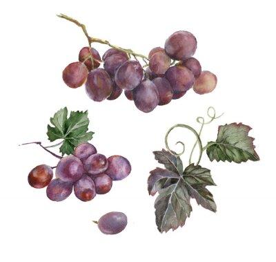 Väggdekor vattenfärg gäng röda druvor