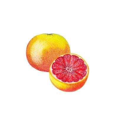 Väggdekor vattenfärg grapefrukt
