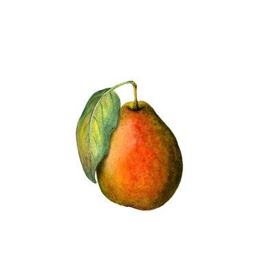 Väggdekor vattenfärg päron