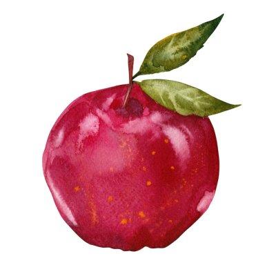 Väggdekor vattenfärg rött äpple