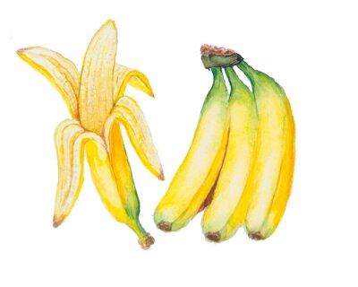 Väggdekor vattenfärgen banan isolerad på den vita bakgrunden