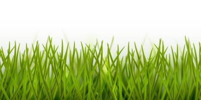 Väggdekor Vector realistic seamless green grass border or frame isolated on white background - nature, ecology, environment, gardening template