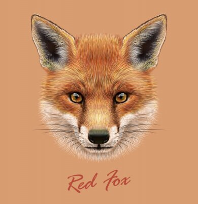 Väggdekor Vektor Belysande porträtt av en Red Fox