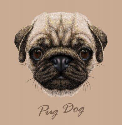 Väggdekor Vektor Belysande Porträtt av mops hund.