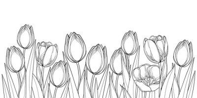 Väggdekor Vektor horisontell gräns med kontur tulpan blommor, knopp och utsmyckade blad i svart isolerad på vit bakgrund. Kontur tulpaner för hälsning vår design eller färgbok.