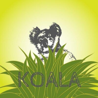 Väggdekor Vektor illustration av en koalabjörn i eukalyptusblad. Koala. Eukalyptusträd.