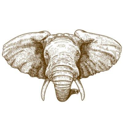 Väggdekor vektor illustration av gravyr elefanthuvud
