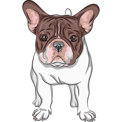 Väggdekor vektor skiss inhemsk hund Fransk bulldogg rasen