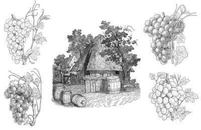 Väggdekor vingård illustration