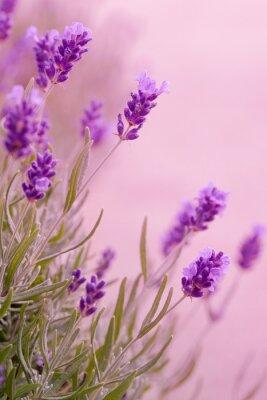 Väggdekor violette Töne