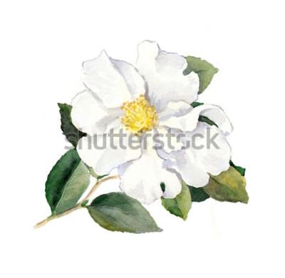 Väggdekor Vit blomma. Akvarell botanisk illustration