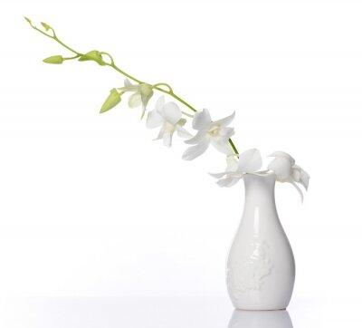 Väggdekor vit orkidé