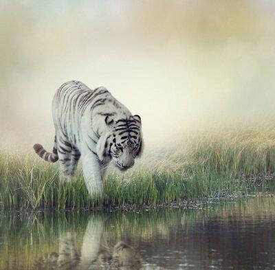 Väggdekor vit tiger