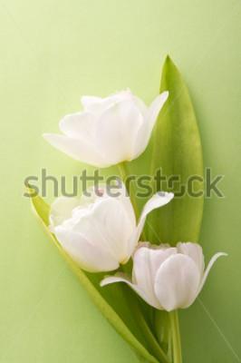 Väggdekor vita tulpaner på grön bakgrund