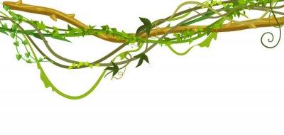 Väggdekor Vridna vilda lianas grenar banner.