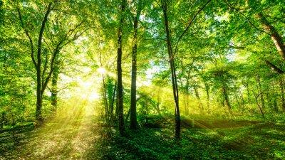 Väggdekor Wald Panorama im enen Sonnenschein