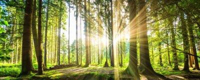 Väggdekor Wald panorama mit Sonnenstrahlen